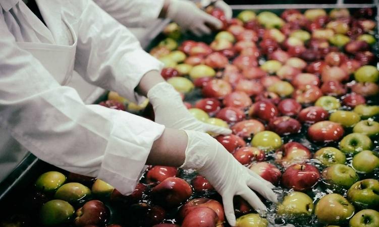 Ministria e Bujqësisë hap periudhën e aplikimit për grante në bujqësi